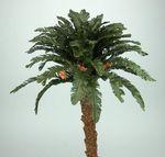 Belens Puig Palme. Handarbeit. 40 cm. Krippenbotanik, Weihnachtskrippe Bild 2