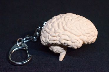 Brain Key Chain Key Ring Miniblings Necklace Key Ring Organ Human Anatomy – Bild 3