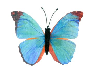 Schmetterling Brosche Miniblings blau Frühling Falter fliegen Textil Insekt – Bild 5