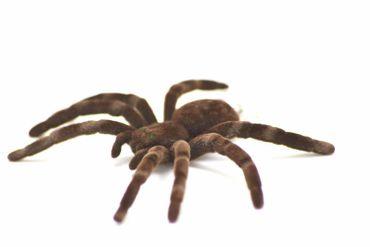 Spinne Kette Halskette Miniblings 80cm Spinnenkette Vogelspinne Halloween XL – Bild 1