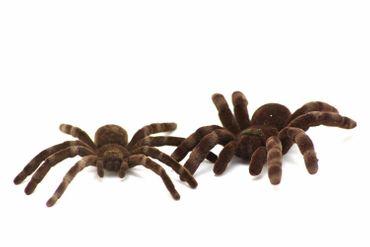 Spinne Kette Halskette Miniblings 80cm Spinnenkette Vogelspinne Halloween XL – Bild 5