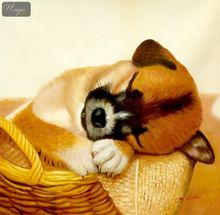 Modern Art - Sleeping Dog In Basket  80x80 cm Original Oil Painting 001