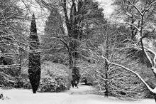 SnowTreesLand352 001