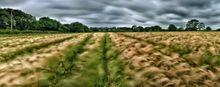 BarleyFieldLand440 001