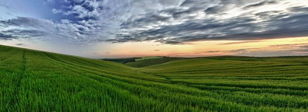 Fields of Green - Fineart Photography by David Freeman