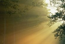 sunlight through trees - Fineart Photography by David Freeman 001