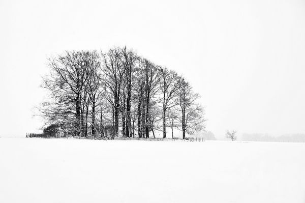 Sussex Snow - Fineart Photography by David Freeman