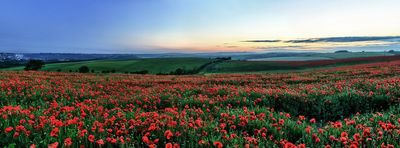Poppy Field, Ditchling - Fineart Photography by David Freeman