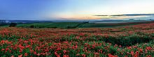 Poppy Field, Ditchling - Fineart Photography by David Freeman 001