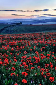 Poppy Field, Ditchling Beacon - Fineart Photography by David Freeman