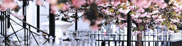 Spring Blossom, Old Seine Brighton - Fineart Photography by David Freeman