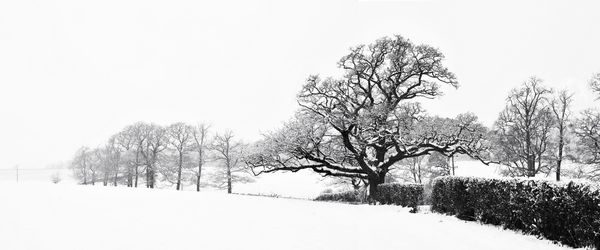 Sussex Downs in The Snow - Fineart Photography by David Freeman