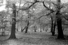 Trees138 001