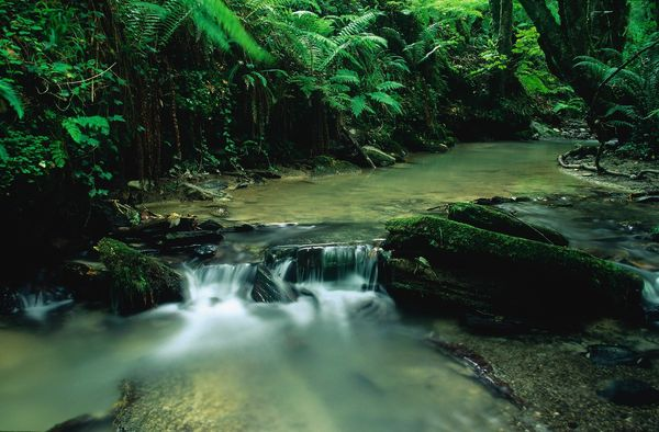Woodland Stream - Fineart Photography by David Freeman