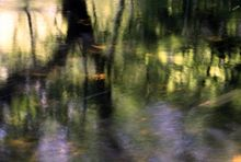 Spring Reflections - Fineart Photography by David Freeman 001