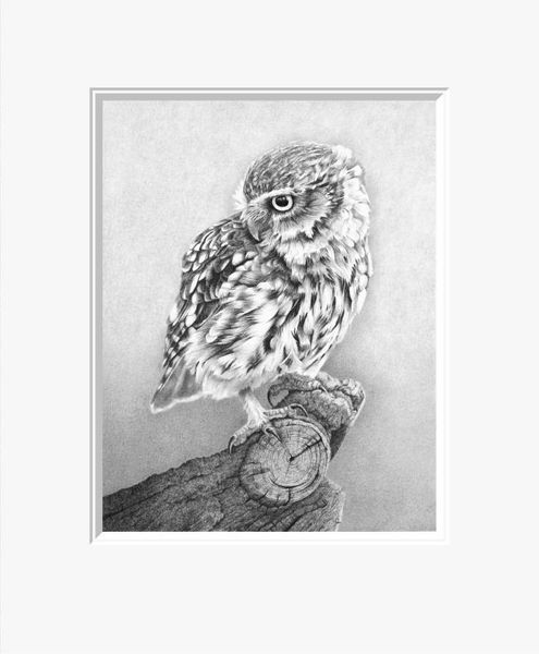 Little Owl- Limited Edition Print by Clive Meredith – image 1