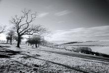 SouthDownsB&WLand604 - Fineart Photography by David Freeman 001
