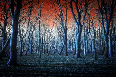 The Blue Forest canvas-Limited Edition Print on Canvas by Neil Hemsley