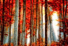 Red Woods-Limited Edition Print on Canvas by Neil Hemsley 001
