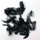 echte Federn gefärbt 15g ca. 270 Stück Deko 5-10cm