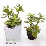 Echeveria Sukkulente künstlich Kunstpflanze Kunstblume ca. 14cm