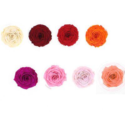 1 XXL Rose gefriergetrocknet stabilisiert echte Rose lange haltbar D: ca. 10cm