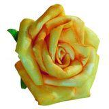 12 Rosenblüten Rosenköpfe Blütenköpfe Schaum Foam Rosen 5cm in versch Farben