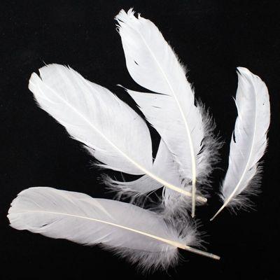 36 weiße Federn lose ca. 18cm