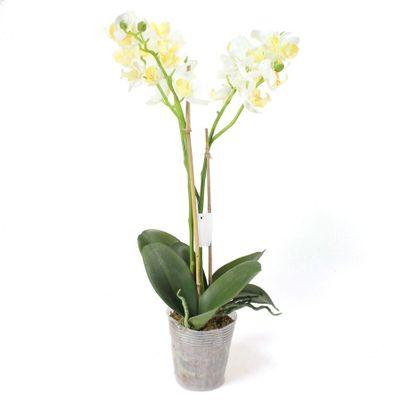 Phalaenopsis Orchidee 2 Rispen creme weiß künstlich H 60cm im Topf