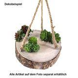 Mini Sukkulente ca L65mm Ø40mm Minisukkulente Echeveria grün Kunstpflanze künstlich