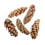 200g Zimtstangen Zimt ca 8-10cm ca 40St Cinnamon Cassia Deko Floristenqualität