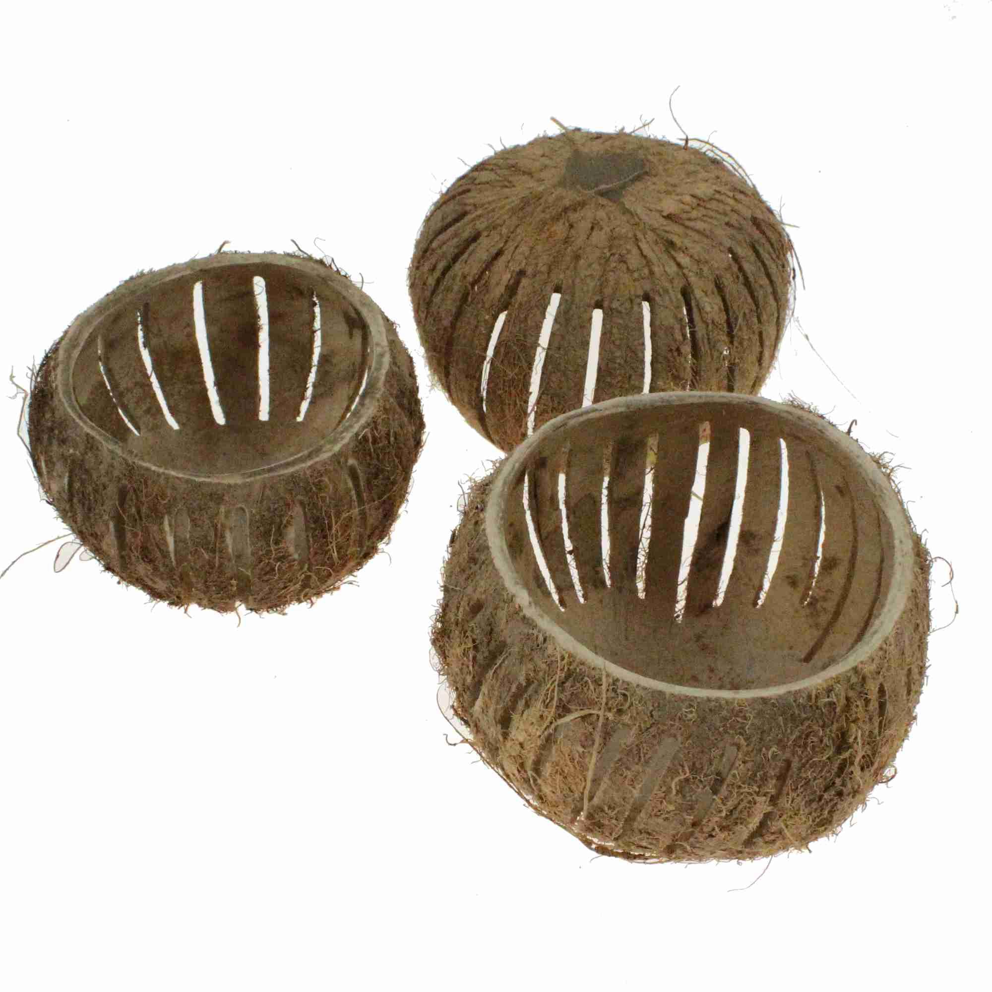 3 Kokosnuß Schalen Ø11-13cm Windlicht Tischleuchter Deko Kokosnuss Topf Cocos
