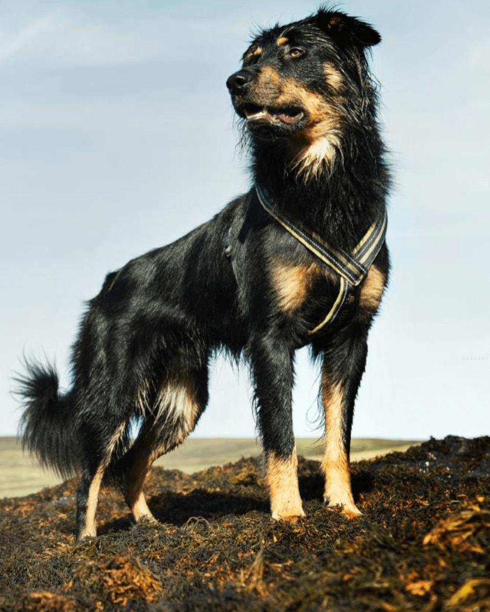 Hundegeschirr Hurtta Wolters