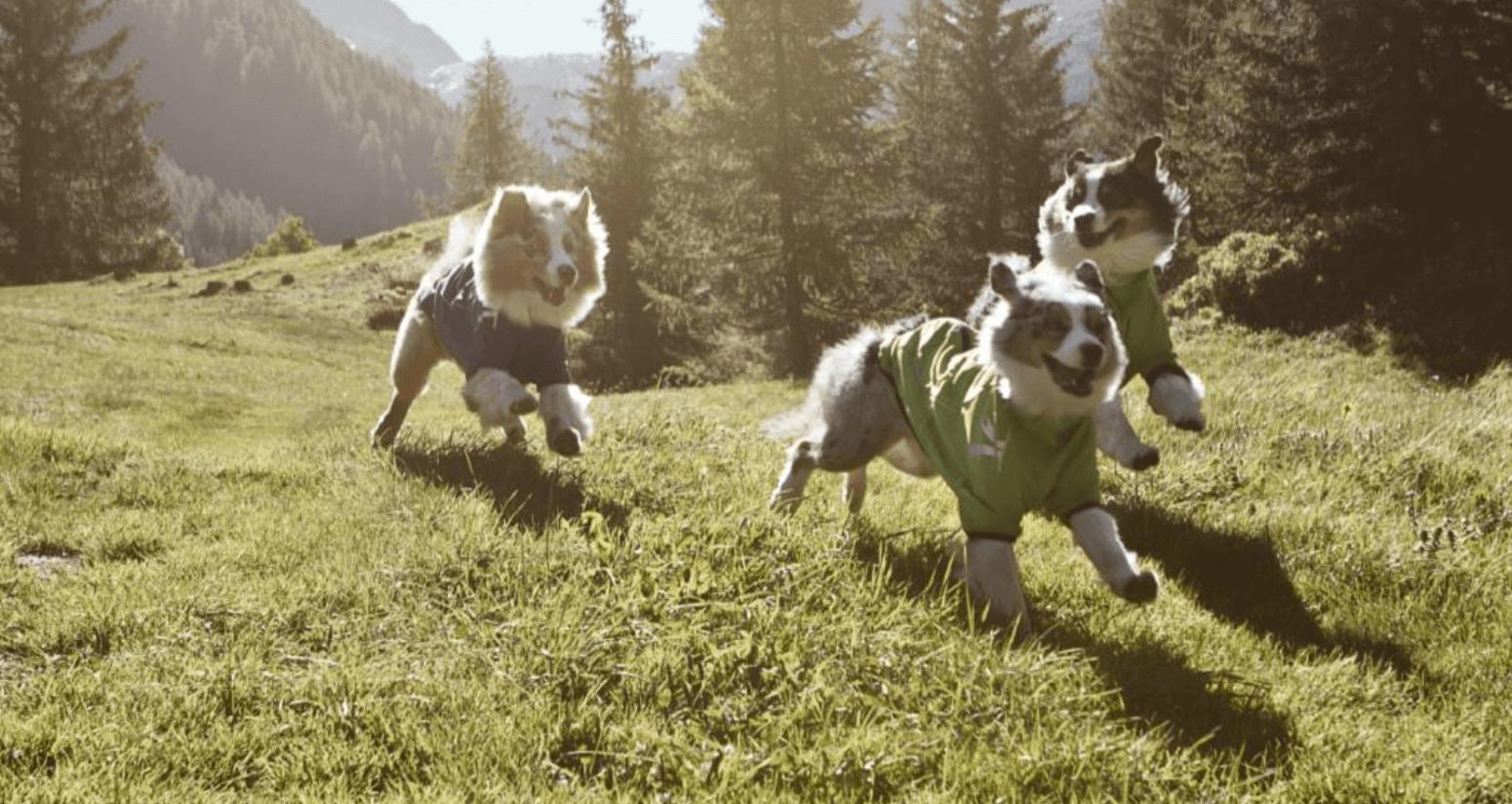 Hunde Mantel Hundemantel Hundewintermantel Hundejacke