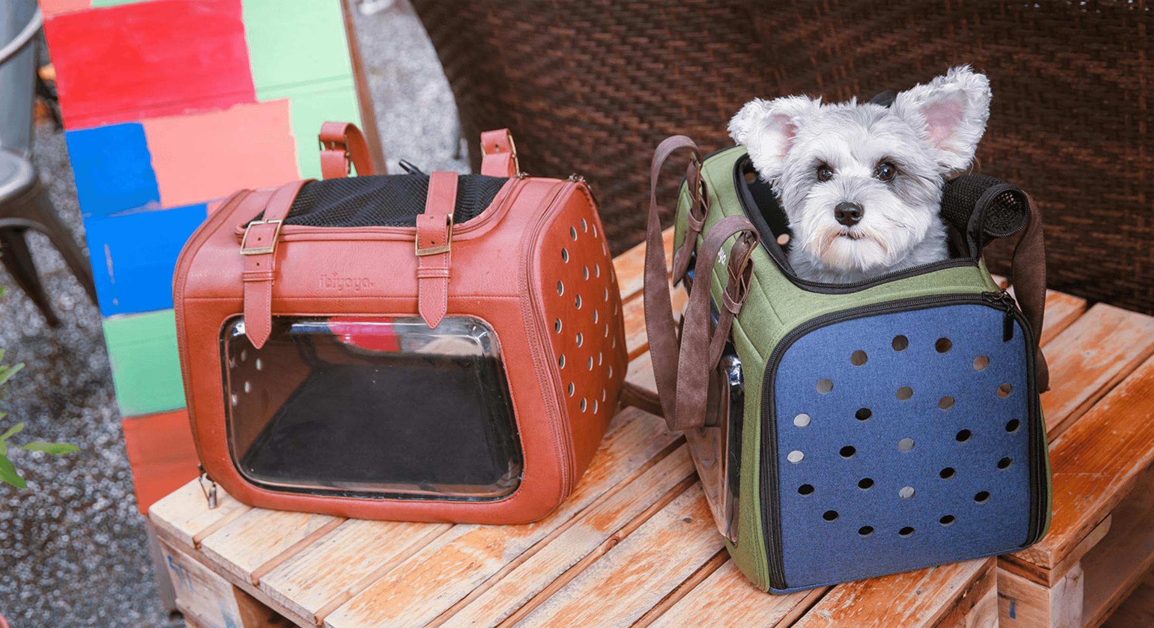 Hundetasche für die Flugkabine im Flugzeug
