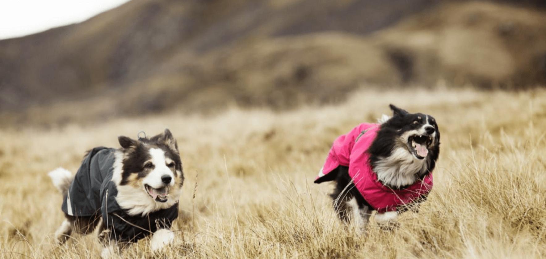 Hurtta Hundemantel Hundepfeifen Hunde Leckerchen Beutel Hunde Training