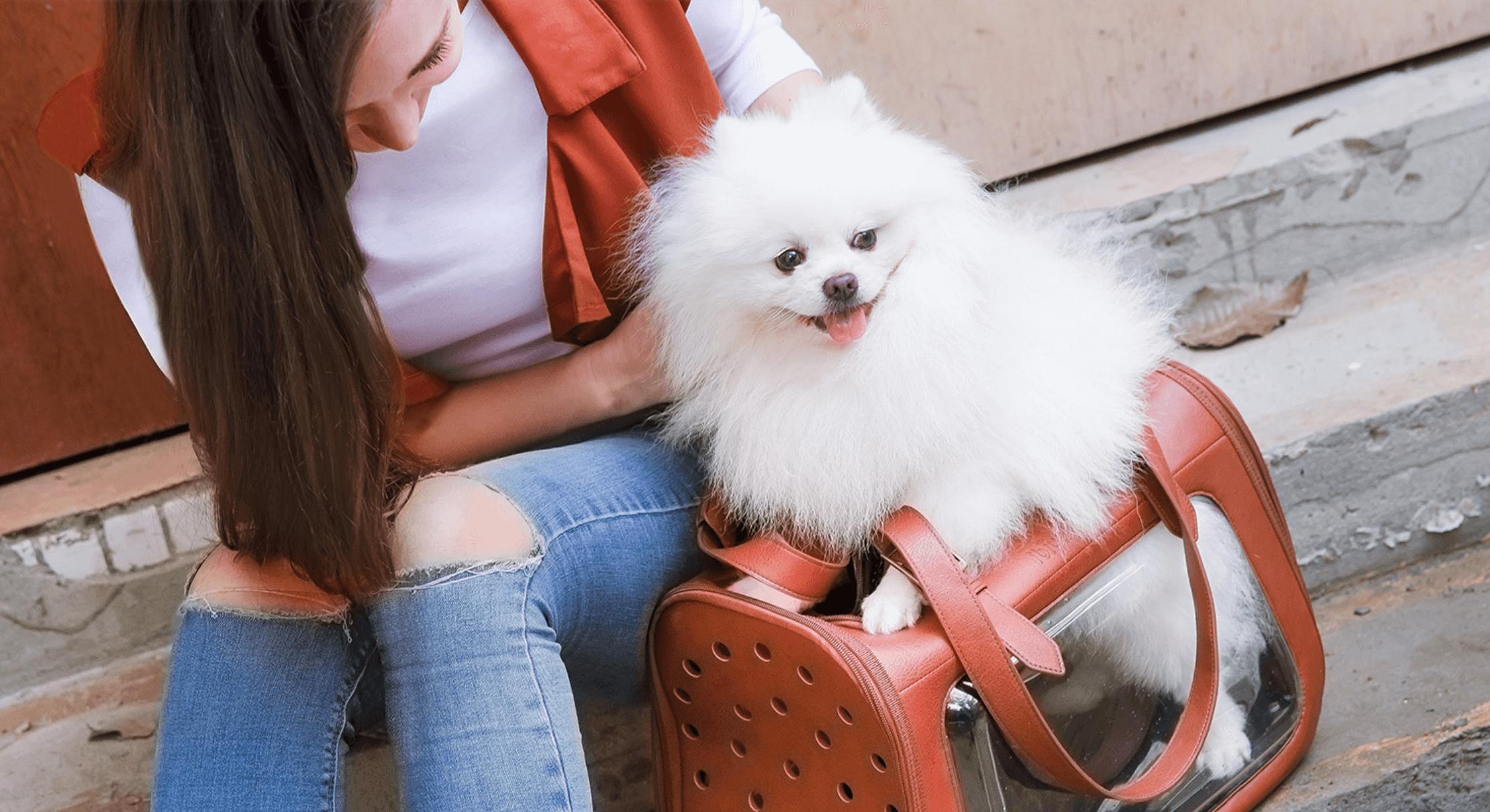 Hundebox und Hundetasche für den Transport des Hundes