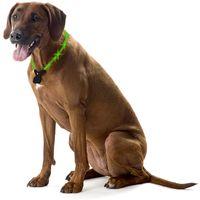 Leuchthalsband Hunde Nightshift Hundehalsband grün