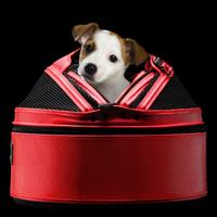 Sleepy Pod - Hunde Flugtasche für die Flugkabine Erdbeerrot bis 7 kg - Hundetasche