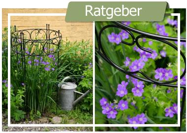 Die Gartengestaltung – Tipps zur Planung Ihrer Träume auf der Grünfläche