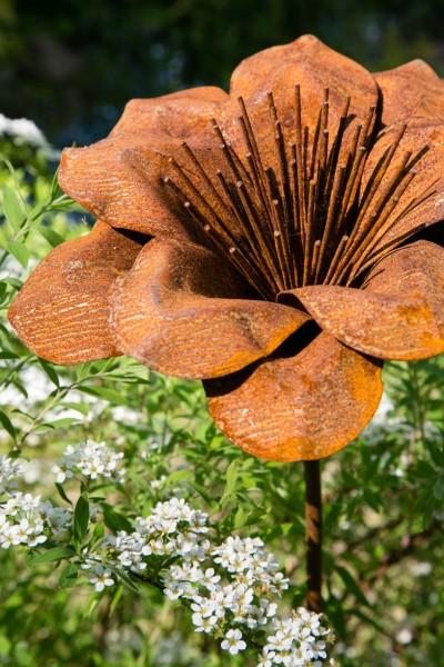 Wer sich das ganze Jahr an der üppigen Blüte erfreuen möchte, hat von nun an die Möglichkeit dazu.