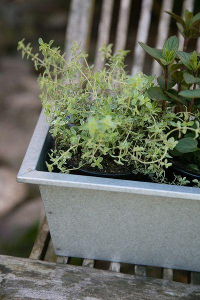 Blumenkasten / Balkonkasten, verzinkt  60cm