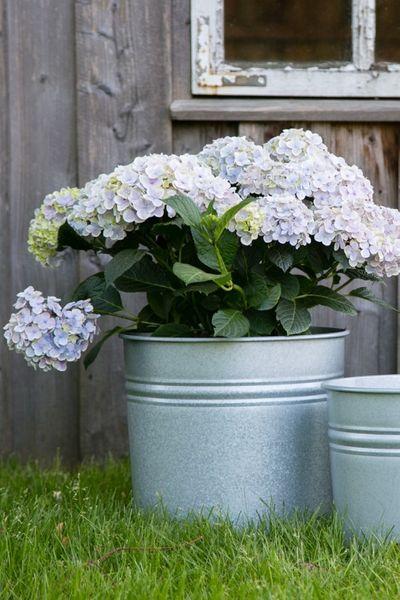 Pflanztopf in versch. Ausführen, Verzinkt + Antik - Zink