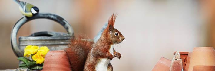 Eichhörnchen Nahrung