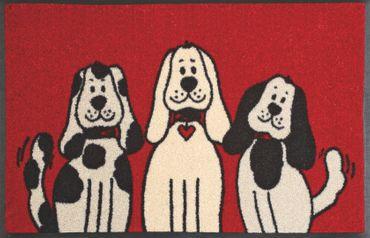 wash+dry Three Dogs 50 x 75 cm Lustige Fußmatte