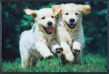 wash+dry Fußmatte Lovely Dogs 50 x 75 cm waschbare Hundefußmatte