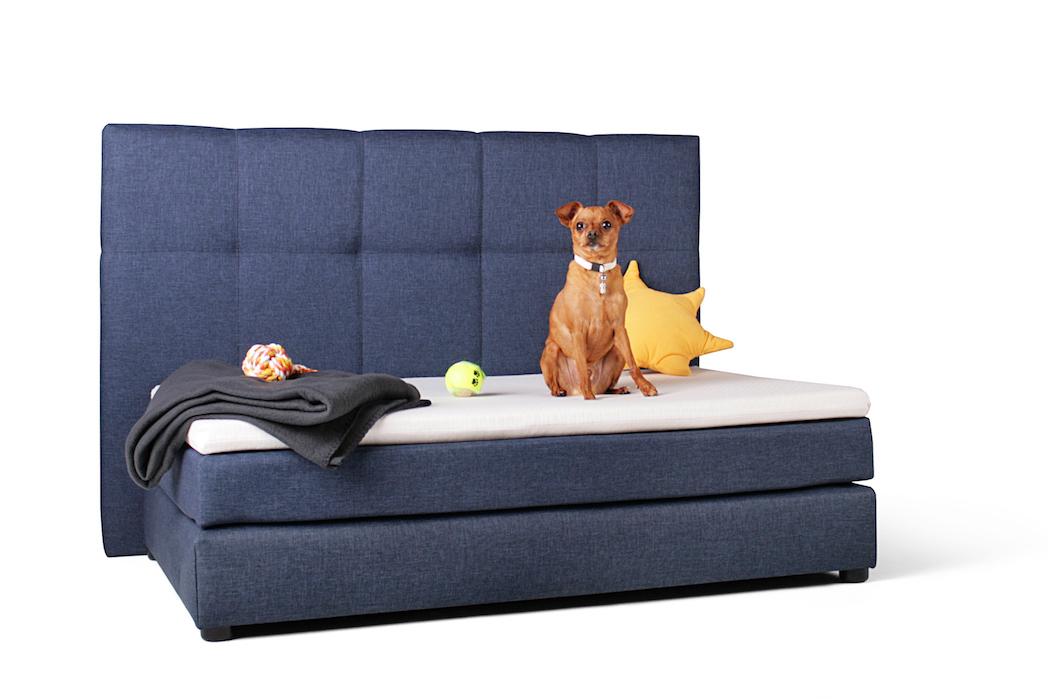 Boxbett für Hund
