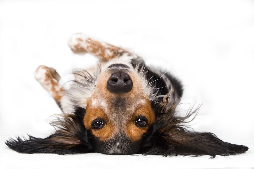 Bunte Spiel- und Schlafauflage für Hunde