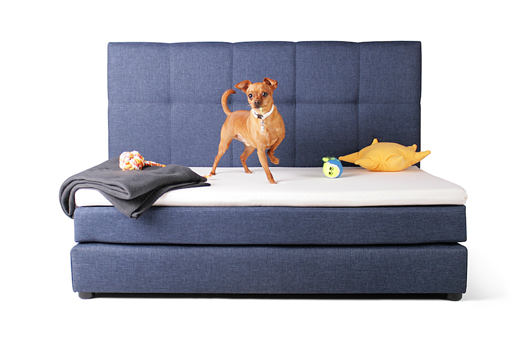 Boxspringbett für Hunde mit verstepptem Kopfteil