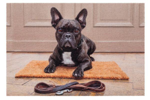 Deco Print Bulldogge 60x40 cm Sauberlaufmatte - Fussmatte - Eingangsmatte - Türmatte - Schmutzfangmatte
